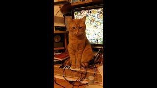 День Рождения моей кошки Кнопы. 5 лет, ее первый юбилей.