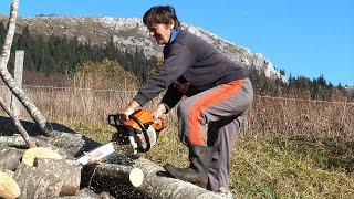 Sofe pila drva, vozi traktor, uzgaja stoku