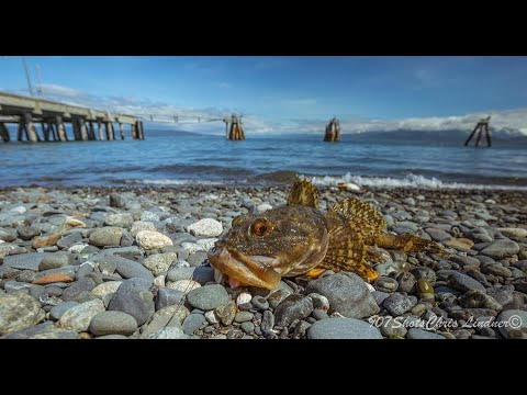 Fishing Alaska: Homer Spit How-to 2019