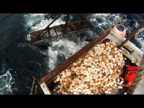 Journey To Sustainable Fisheries: 40 Years Under The Magnuson-Stevens Act