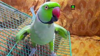 Meet The Rainbow My Amazing Talking Parrot