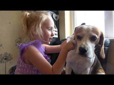 When You Ask Child to Clean her Dog's Ears: Fun with Dogs
