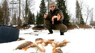 Рыбалка.Сумасшедший клев.Ловлю рыбу на палец.Изба глухариная.Олени на дороге