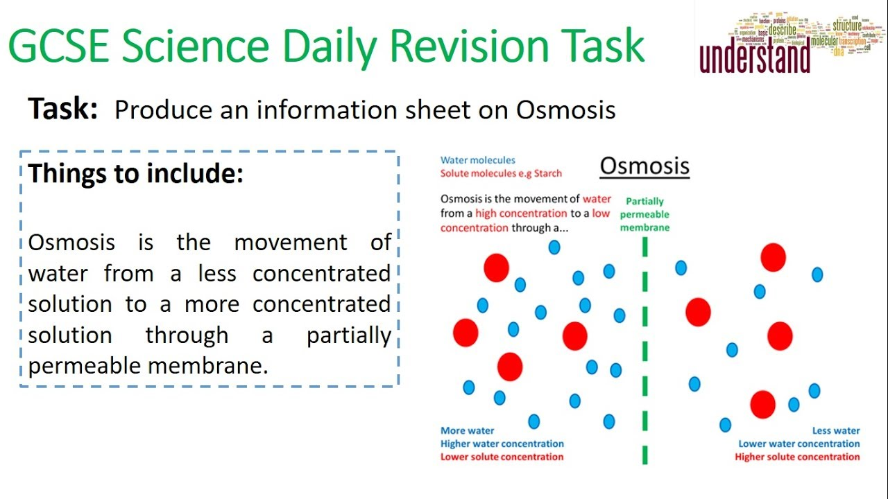 GCSE Science Daily Revision Task 8:  Osmosis - YouTube