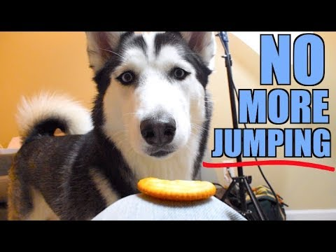 Teach Your Dog To STOP JUMPING (Simple Steps)