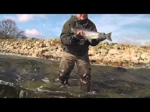 Fish Seatrout on Funen with a Guide