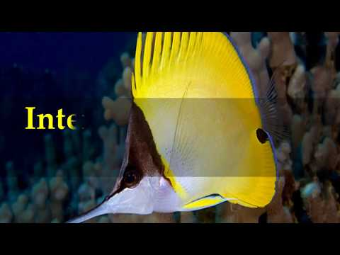 Interesting Butterfly Fish Facts