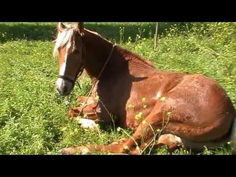 Il Mio Cavallo Che Dorme Come Un Cucciolo Youtube