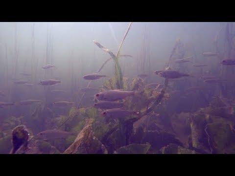 Stressless & Harmless Fishing At Nene River & Grand Union Canal (Northampton, Midlands, UK)
