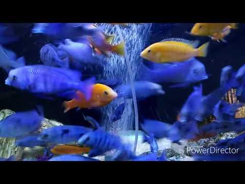 Balık ve müzik