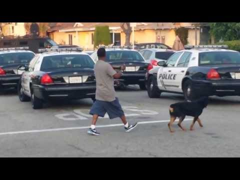 Police Shoot Dog In Front of Owner in Hawthorne, California! (Graphic)