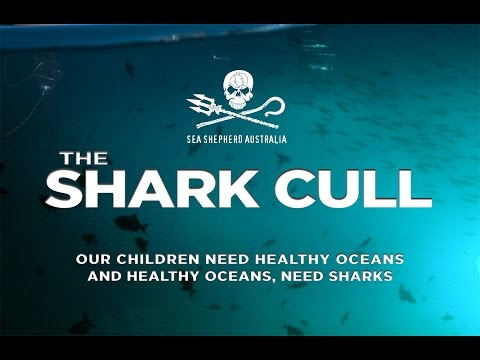 The Shark Cull