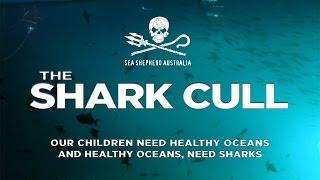The Shark Cull
