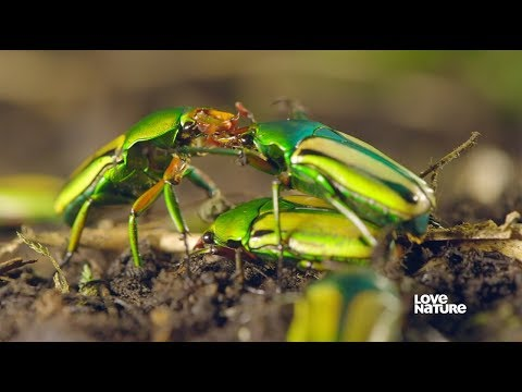 Insect Mating - Everything You Need To Know | Love Nature