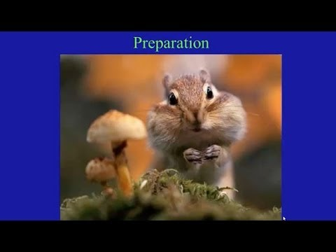 Winter Wildlife Survival Strategies