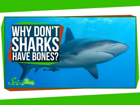 Why Don't Sharks Have Bones?