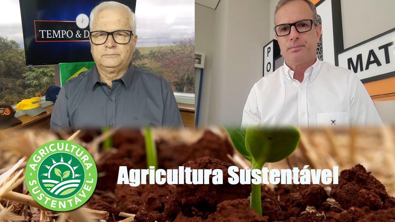 Polemica: usar escarificador ou braquiária? Resposta: agricultura sustentável necessita de cobertura