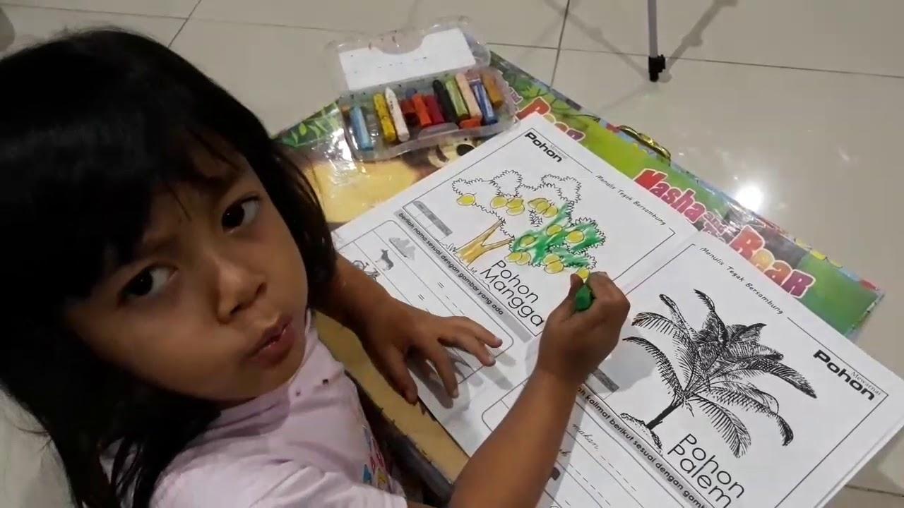 Cara Putri Dila Mewarnai Gambar Pohon Mangga Belajar Mewarnai