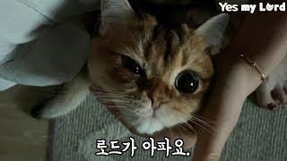 고양이 결막염 증상, 원인은?