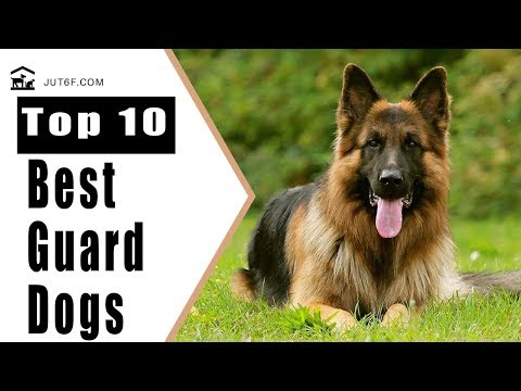 Best Guard Dogs - Top 10 Best Guard Dogs For Security