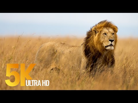 5K African Wildlife Documentary Film - Etosha National Park, Namibia, Africa