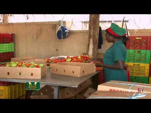 Agriculture Perishables Export