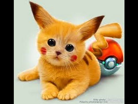 Funny videos Funny cats Funny animals Cute cats compilation