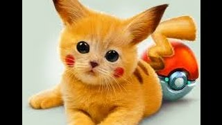 Best funny animal videos ..... Cute cats most funny videos ..... cat vs dog most funny videos . -
