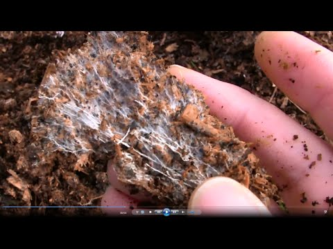 How to Grow Your Own Mycorrhizal Fungi in Chicken Manure and Wood Shavings