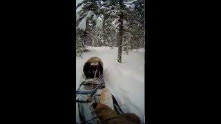 По путику на буксировщике РАЙДА (воскресная прогулка)(, 2015-12-13T07:51:20.000Z)
