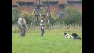 Central Asian Shepherd Dogs Murat and Maisun - security work (situation)