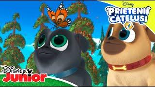 ? Momente de aventură cu Bingo și Rolly | Prietenii Cățeluși | Disney Junior România