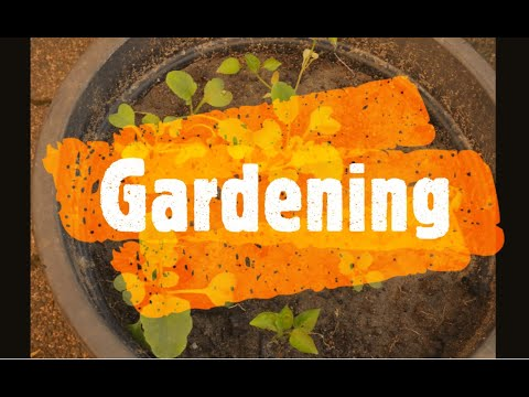 Gardening || Random Pictures || Windows video editor || Garden pictures