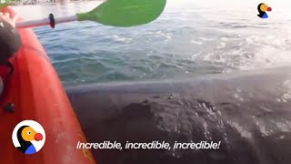Whale Lifts Kayakers Onto His Back | The Dodo