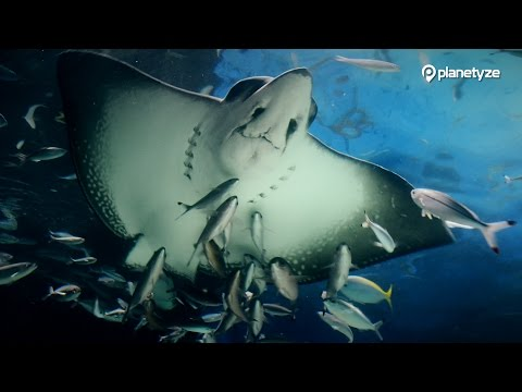 Sunshine Aquarium, Tokyo | One Minute Japan Travel Guide