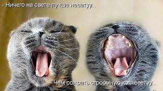 Смешные картинки про кошек и котят Выпуск № 4  FUNNY CATS СМЕШНЫЕ КОШКИ
