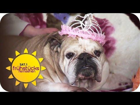 Deutschlands FAULSTER Hund: Cheyenne sucht ein Zuhause | SAT.1 Frühstücksfernsehen | TV