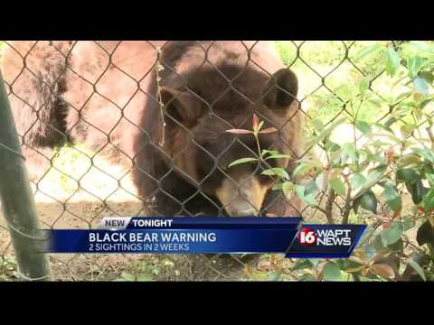Bears moving around in Mississippi