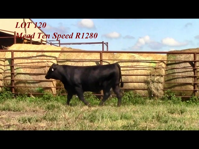 Mead Angus Lot 120