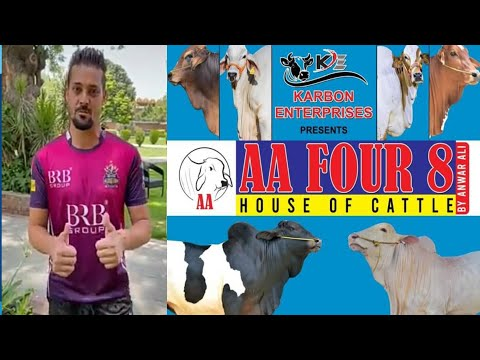 AA Four 8 House of Cattle