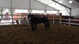 Live demonstration at The Horse Experience at Sydney Royal Show