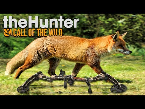 BOW HUNTING RED FOX   The Hunter Call Of The Wild   Hirschfelden 2