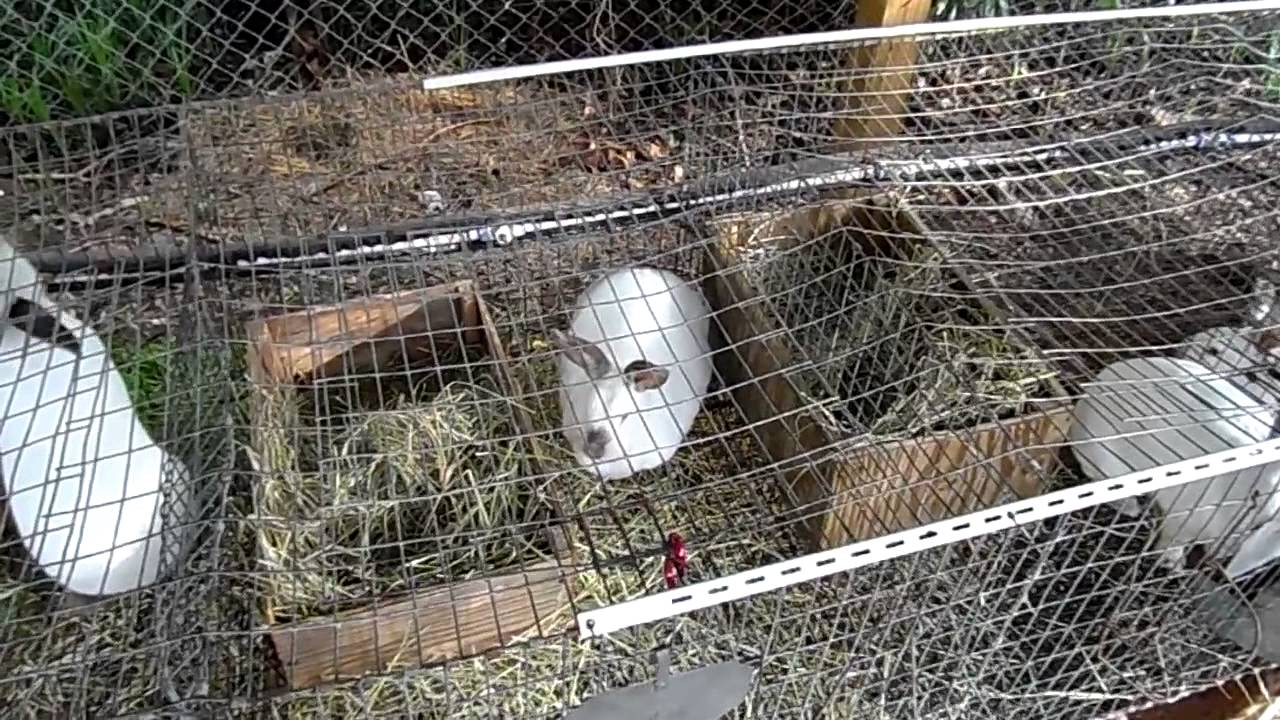 Backyard Rabbitry - YouTube