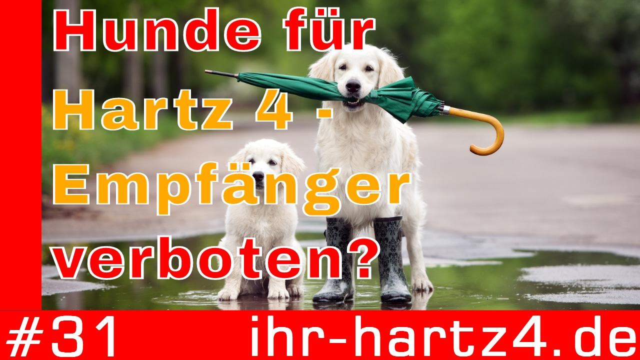 Partnervermittlung für hartz4 empfänger