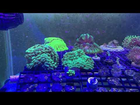เตรียมตัวก่อนเริ่มเลี้ยงปะการัง! By Thailand Reefer