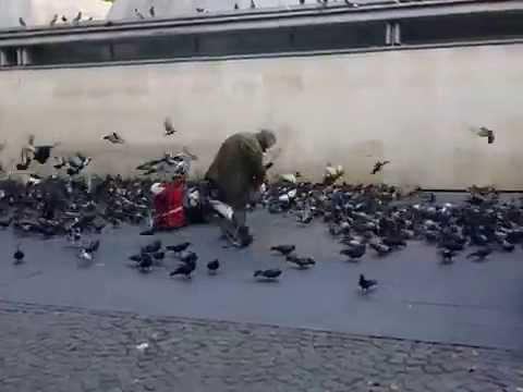 Homeless Man feeding pigeons Paris France outside of the Pompidou Museum of Modern Art MOMA