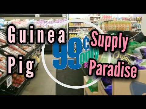Guinea Pig Supply Paradise - 99 Cents Only Store