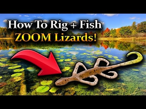 HOW TO RIG ZOOM LIZARDS FOR BASS! HOW TO FISH ZOOM LIZARDS! NEW ENGLAND BASS FISHING!