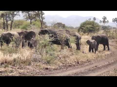 Safari in Meru Kenya June 2015