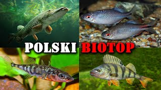 Polskie RYBY w Akwarium 🐟 Akwarystyka Zimnowodna
